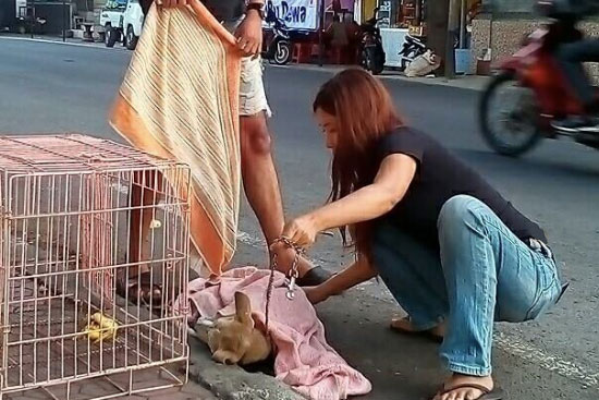 Bali Dog Rescue