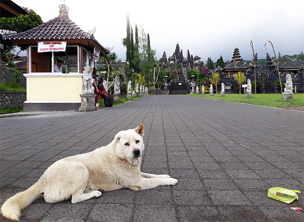 Mount Agung Dog Rescue