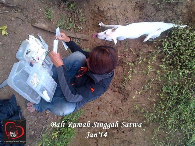 Bali Dog Rescue - Fenny