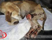 Lulu - Bali Dog Rescue