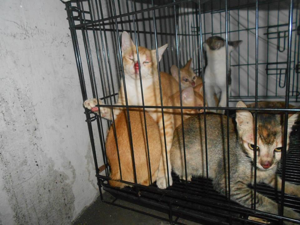 Sanglah Cats Rescue